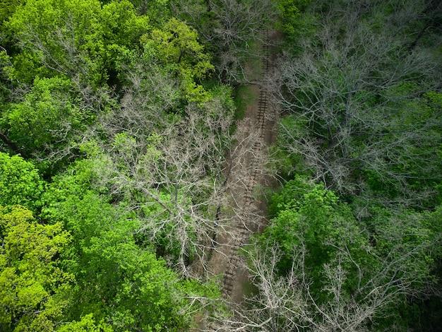 Vista aerea di una ferrovia del treno nella foresta verde