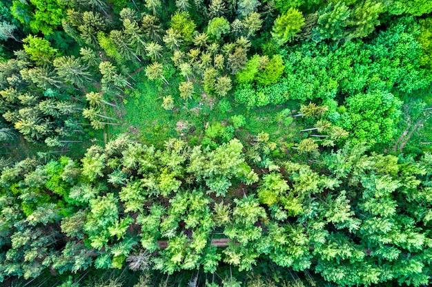 Vista aerea di alberi nelle montagne dei vosgi settentrionali - dipartimento del basso reno della francia