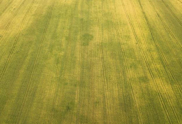 Vista aerea di un campo di grano.