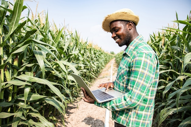 Agricoltore americano africano che cerca con il computer portatile nel campo di grano che esamina il raccolto a cielo blu e soleggiato