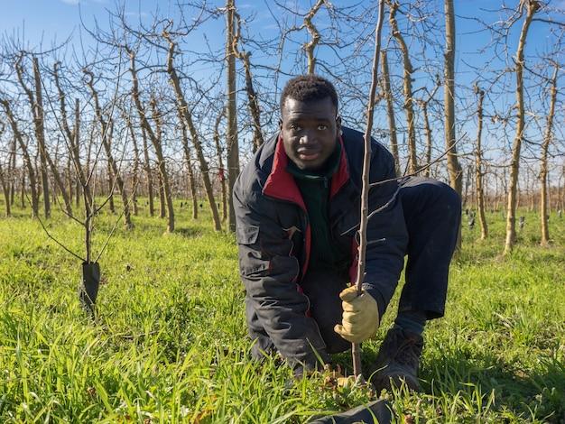 Agricoltore africano che pianta alberi da frutto in una soleggiata giornata invernale. concetto di agricoltura.