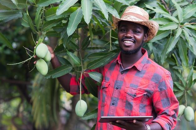 L'agricoltore africano sta raccogliendo il frutto del mango in una fattoria biologica con l'uso di tablet. concetto di agricoltura o coltivazione