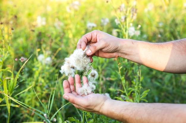 L'uomo afroamericano sta raccogliendo cotone nel campo. mani che tengono pianta. consumismo dell'industria della moda. lavoro da schiavi a bassa retribuzione. tendenze dannose per l'ambiente.