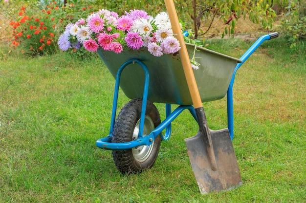 Dopo il lavoro nel giardino estivo. carriola con fiori tagliati e vanga su erba verde.