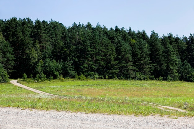Attività agricole nel campo della produzione agricola, periodo estivo stagionale nei campi agricoli dove vengono coltivate colture di piante agricole su suoli fertili