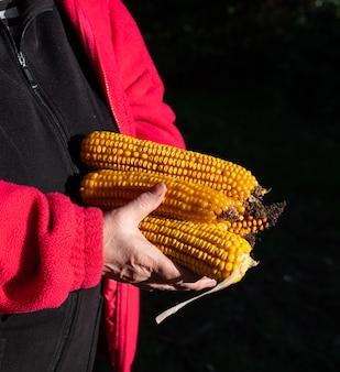 Concetto agricolo. agricoltore che tiene la spiga di grano sulla pannocchia all'aperto