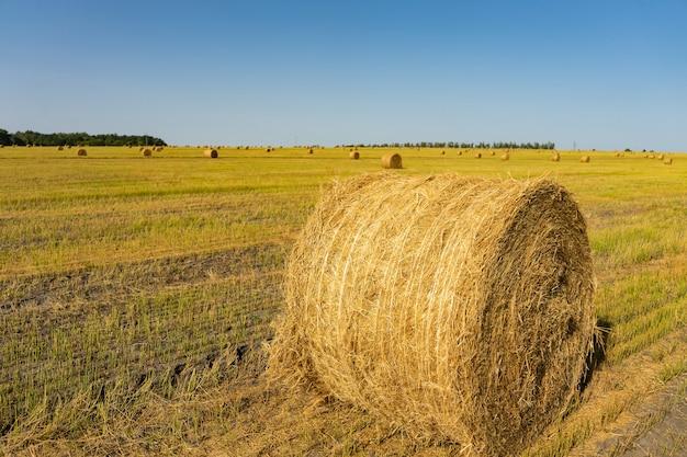 Campo agricolo. fasci rotondi di erba secca nel campo contro il cielo blu. rotolo di fieno contadino da vicino