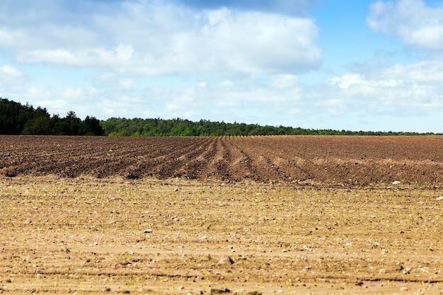 Campo agricolo che è stato solchi arati per piantare patate.