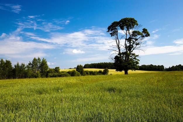 Un campo agricolo su cui crescono cespugli e alberi
