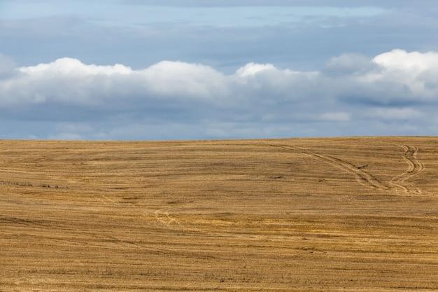 Un campo agricolo su cui colture di cereali, frumento o segale, attività agricole in europa in oriente