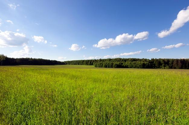 Campo agricolo su cui crescono i cereali