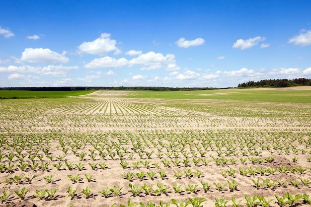 Campo agricolo su cui coltivare colture