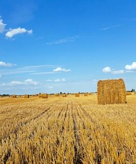 Un campo agricolo su cui cresce anche il grano raccolto