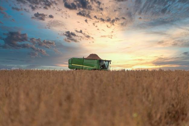 Trattore agricolo che raccoglie soia nel campo - pederneiras-sao paulo-brasil - 03-20-2021.