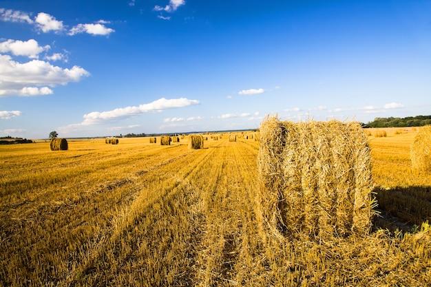Agricoltura - un campo agricolo su cui sono una pila dopo la pulizia dei cereali
