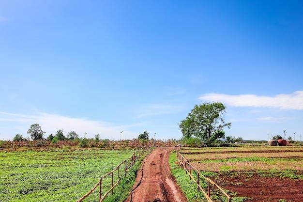Area di agricoltura sul paesaggio rurale - stagno, prati con cielo blu e nuvole