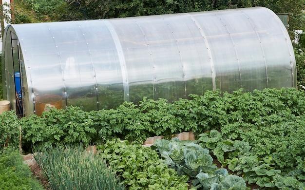Campo agricolo con verdure in crescita: carote, patate, barbabietole e foglie di cavolo. concetto di agricoltura e giardinaggio