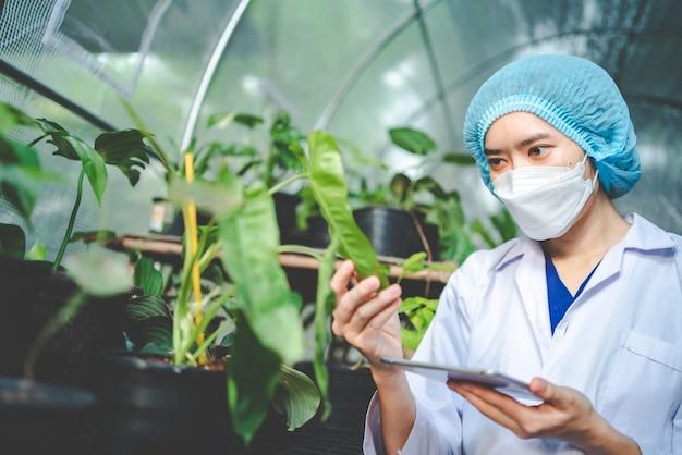 Pianta da giardino agricola in serra moderna, fiore naturale in fattoria, piantagione di foglie vegetali per alimenti biologici, industria coltivata orticoltura botanica, crescita di semi con ambiente solare