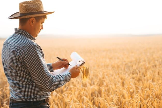 Concetto di agricoltura e raccolta. germogli di grano in mano di un contadino. agronomo che scrive su un documento il piano di sviluppo del grano. banner con copia spazio.