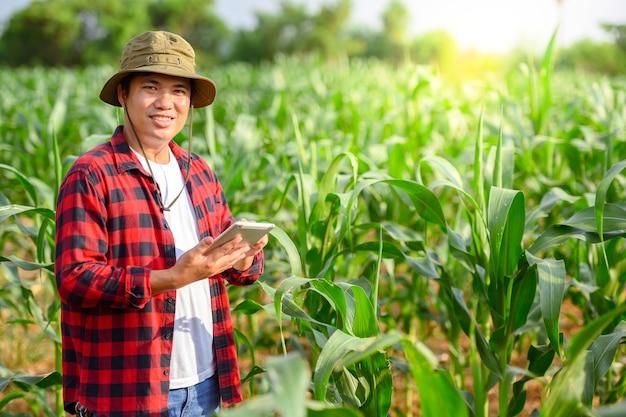 Agricoltura lavorare nei campi di mais utilizzando compresse per controllare la qualità delle piante di mais e delle foglie di mais.