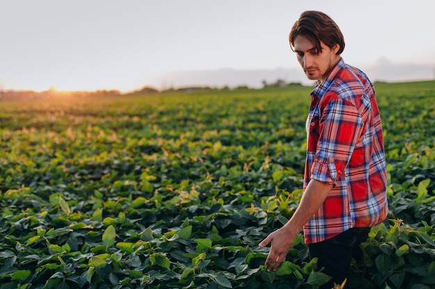 Agronomo in un campo che prende il controllo delle piante di raccolto touchesa.