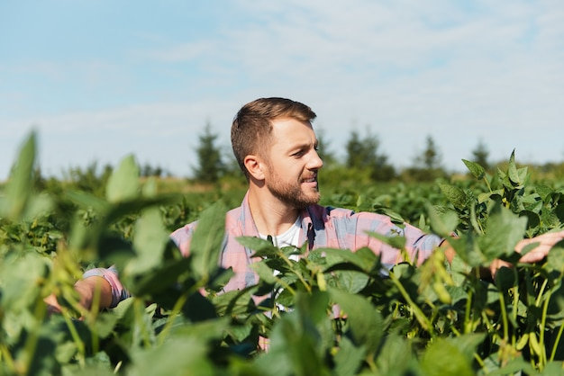Agronomo che ispeziona le colture di semi di soia che crescono nel campo dell'azienda agricola. concetto di produzione agricola. giovane agronomo esamina il raccolto di soia sul campo in estate. contadino su un campo di soia