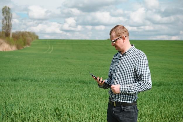 Un agronomo indaga il processo di maturazione del grano giovane in campo. concetto di azienda agricola