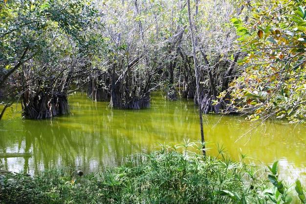 Cenote di aguada nella giungla maya del messico del messico