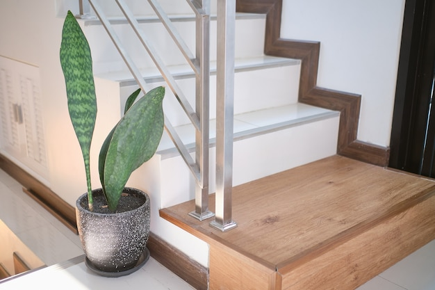Piante depurative aria foglia samse-vieria, sansevieria masoniana chahin, asparagaceae in un moderno cemento nero all'angolo di scala o scaletta