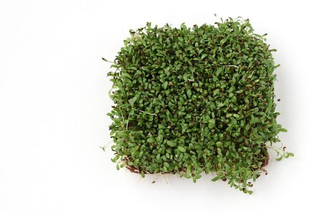 Alfalfa microgreen si trova su una superficie bianca, vista dall'alto, copia spazio