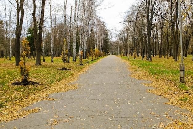 Vicolo nel parco cittadino in autunno