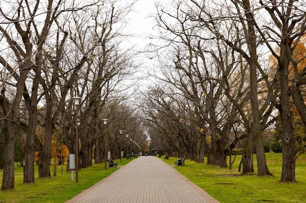 Vicolo di alberi senza foglie nel parco cittadino di autunno, panchine. novembre.