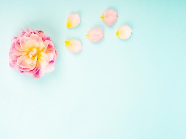Da solo tulipano rosa su sfondo blu con copia spazio per la carta