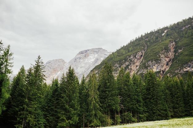 Foresta alpina con alberi di pino in una bella giornata estiva, viaggiando intorno alle dolomiti in italia.