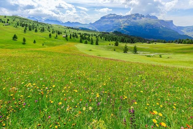 Prato alpino con fiori selvatici