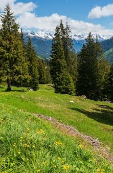 Vista alpina con i fiori gialli del dente di leone sul pendio di montagna di estate (austria)