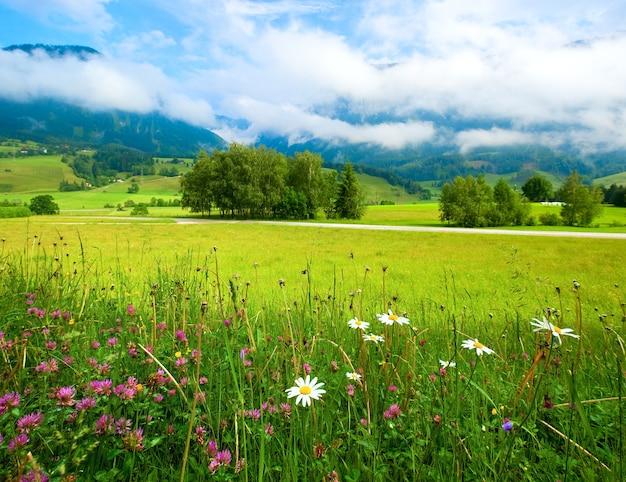 Prato di montagna delle alpi tranquilla vista estiva