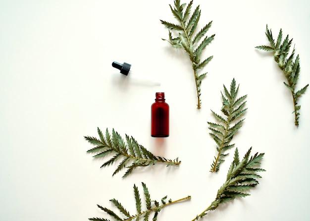 Medicina alternativa. foglie di erbe medicinali, una bottiglia su uno sfondo bianco.