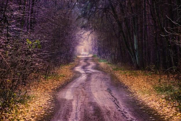 Incredibile percorso del tunnel autunnale attraverso una foresta colorata