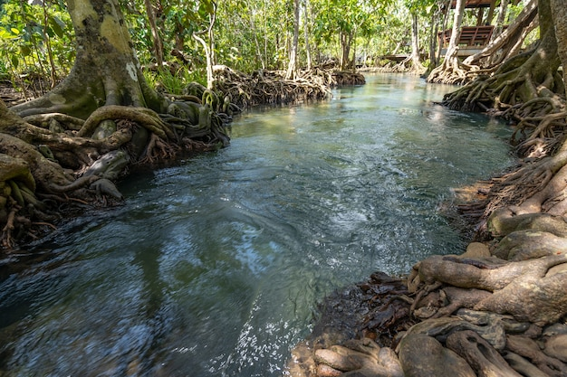 Incredibile canale color smeraldo cristallino con foresta di mangrovie a thapom krabi thailandia, la piscina emerald è una piscina invisibile nella foresta di mangrovie.