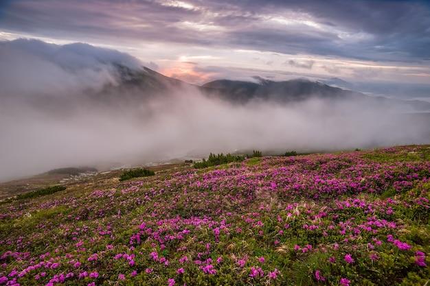 Incredibile paesaggio con fiori in montagna e cielo maestoso