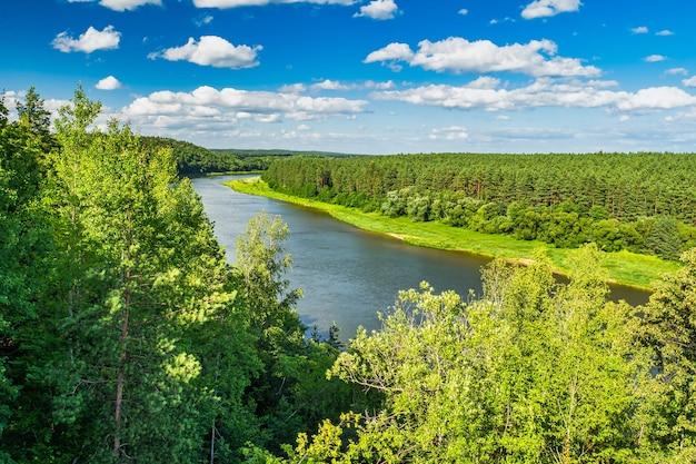 Incredibile paesaggio fluviale e forestale. foresta con bella luce solare.