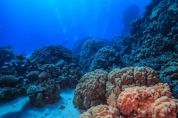 Incredibile mondo sottomarino del mar rosso