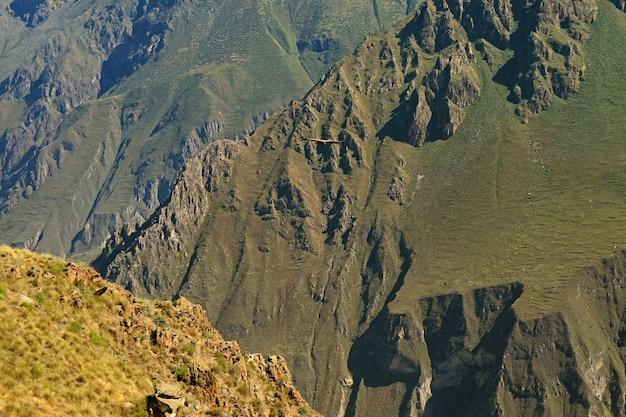 Incredibile vista del canyon del colca con battenti condor andino cruz del condor viewpoint regione di arequipa perù