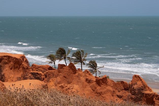 Splendida vista sulla spiaggia di ouro branco con tre palme da cocco con erba secca?