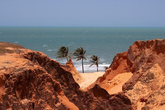 Splendida vista dei tre alberi di cocco vicino alla spiaggia in una giornata di sole