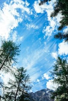 Incredibile cielo vivido con nuvole delicate sopra la catena montuosa innevata dietro alti alberi di conifere