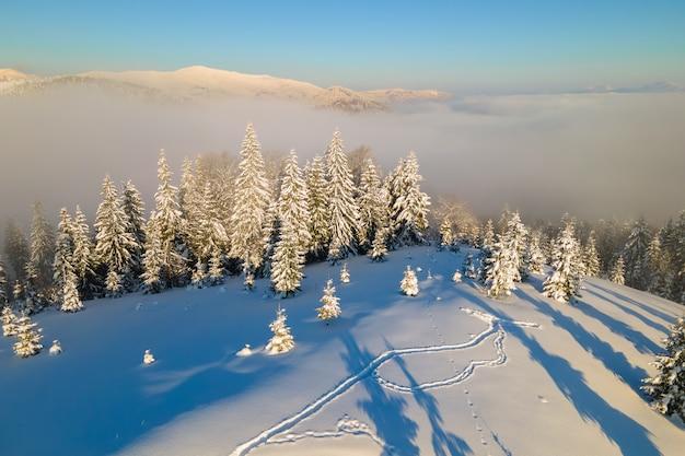 Incredibile paesaggio invernale con pini di foreste innevate nelle fredde montagne nebbiose all'alba.