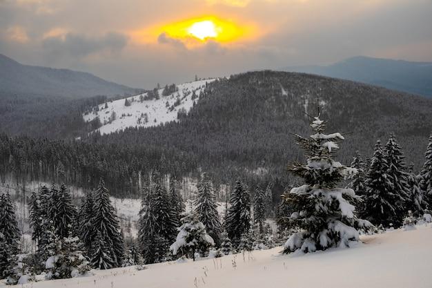 Incredibile paesaggio invernale con pini di foreste innevate nelle fredde montagne all'alba.