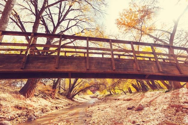 Incredibile ponte di legno nella foresta autunnale